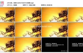 高清实拍视频素材丨清晨日出时分竹枝竹叶的剪影