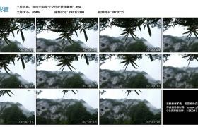 高清实拍视频素材丨细雨中仰望天空竹叶悬崖峭壁1