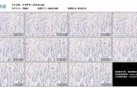 高清实拍视频素材丨冬季野草上的冰凌