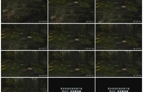 高清实拍视频素材丨摇摄森林里砍伐树木后留下的树桩