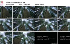 高清实拍视频素材丨摇摄森林里的参天大树