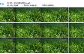 4K视频素材丨阳光洒在摇曳的草地上
