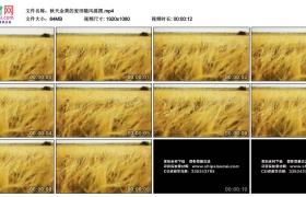 高清实拍视频素材丨秋天金黄的麦田随风摇摆