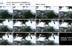 高清实拍视频素材丨细雨中仰望天空竹叶悬崖峭壁2