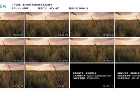 高清实拍视频素材丨麦田里的麦穗映衬着霞光