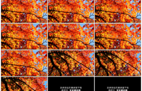 4K实拍视频素材丨摇摄秋天阳光照射下黄色红色的树叶