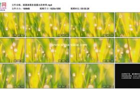高清实拍视频素材丨摇摄清晨挂着露水的青草