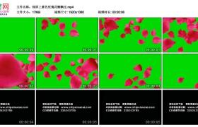 高清动态视频丨绿屏上紫色玫瑰花瓣飘过