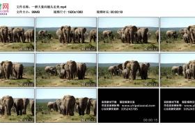 高清实拍视频丨一群大象向镜头走来