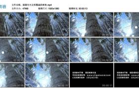 高清实拍视频素材丨摇摄冬天白雪覆盖的树林