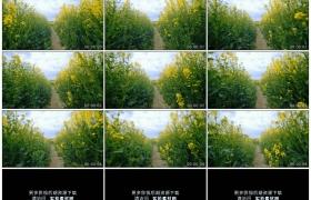 4K实拍视频素材丨穿行在春天金黄色的油菜花田中