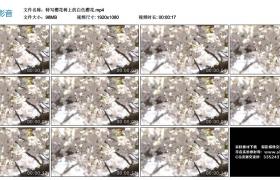 高清实拍视频丨特写樱花树上的白色樱花