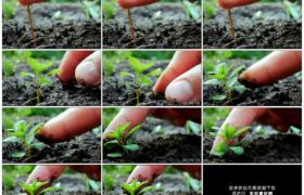 高清实拍视频素材丨特写将一株绿色植物的幼苗栽种到土地里