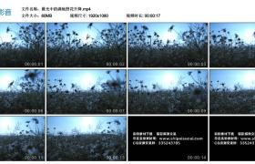 高清实拍视频素材丨晨光中的满地野花升降