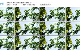 高清实拍视频丨夏日正午阳光透过摇曳的树叶