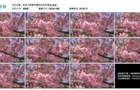 高清实拍视频丨阳光下的粉色樱花在风中摇曳