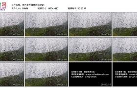 高清实拍视频丨雨天窗外朦胧的绿