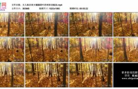 高清实拍视频素材丨无人机在秋天铺满黄叶的树林里航拍