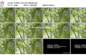 高清实拍视频素材丨阳光照射下竹林中的竹叶随风摆动
