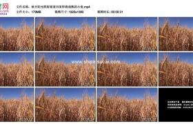高清实拍视频素材丨秋天阳光照射着麦田里即将成熟的小麦