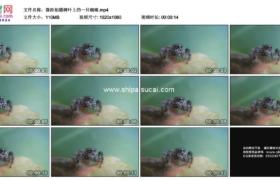 高清实拍视频素材丨微距拍摄树叶上的一只蜘蛛