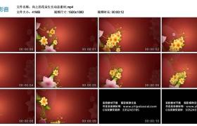 高清动态视频丨向上的花朵生长动态素材