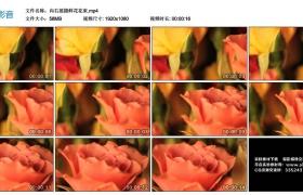 高清实拍视频丨向右摇摄鲜花花束