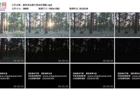 高清实拍视频丨森林里拍摄日落延时摄影