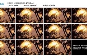 高清实拍视频丨夕阳下的自然风光 倦鸟归巢
