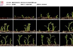 高清实拍视频丨嫩绿色的幼苗从土壤中钻出并长高延时摄影