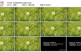 高清实拍视频素材丨阳光照射着草地上的蒲公英