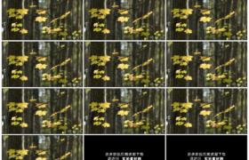 高清实拍视频素材丨秋天树林里阳光照射着的黄色树叶