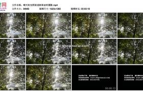 高清实拍视频素材丨晴天阳光照射进树林延时摄影