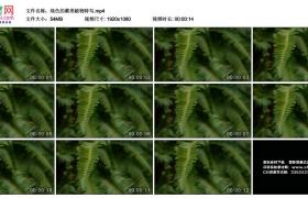 高清实拍视频素材丨绿色的蕨类植物特写