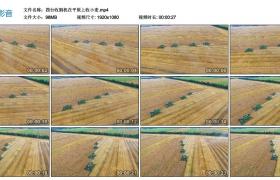 高清实拍视频丨四台收割机在平原上收小麦