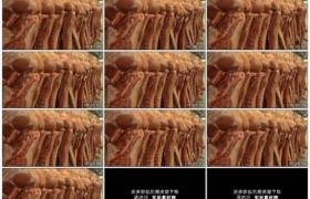 高清实拍视频素材丨特写屠宰场挂着摇摆着的猪肉
