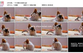 高清实拍视频素材丨一只小猫玩毛线团