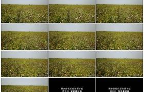 4K实拍视频素材丨航拍一大片棉花地
