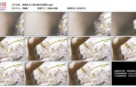 高清实拍视频丨摇摄阳光下随风摆动的樱花