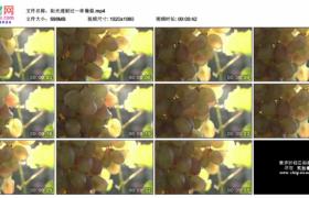 高清实拍视频素材丨阳光透射过一串葡萄