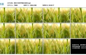 高清实拍视频丨暖阳中的野草随风摇摆