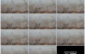 高清实拍视频素材丨森林火灾后冒着白烟的灰烬