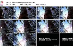 高清实拍视频丨仰拍冬天的森林里阳光照射下的白雪纷飞