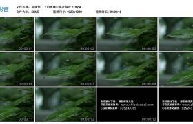 高清实拍视频丨高速快门下的水滴打落在绿叶上