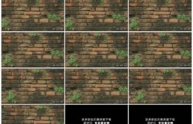 高清实拍视频素材丨摇摄长着杂草的破旧砖墙