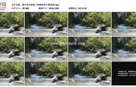 高清实拍视频素材丨晴天阳光照射下的树林里小溪流淌