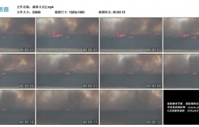 高清实拍视频素材丨森林火灾2