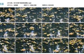 高清实拍视频丨秋天的落叶随着溪流飘过