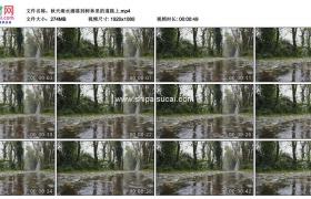 高清实拍视频素材丨秋天雨水滴落到树林里的道路上