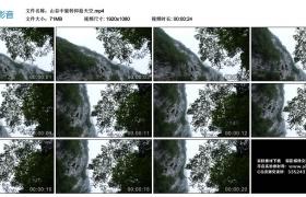 高清实拍视频素材丨山谷中旋转仰拍天空